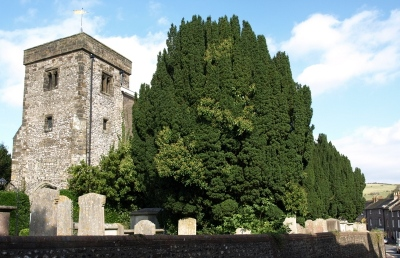 Irish Yew, All Saints Church, Lewes