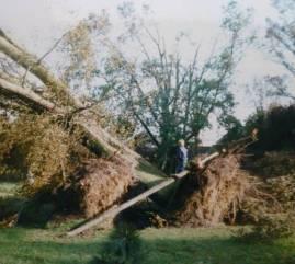 Fallen tree Lewes