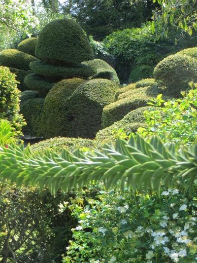 6 Grange Road garden open, Lewes