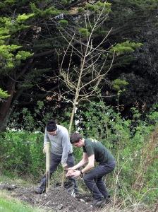 Planting Alder in Lewes
