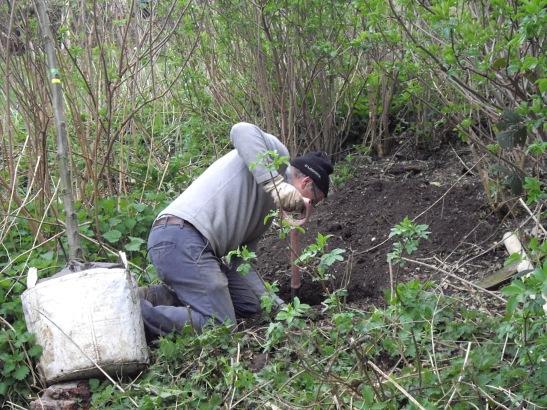 Lewes tree planting