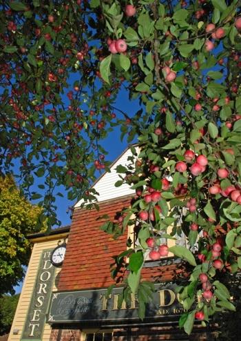 Robin_Bath_The Dorset_Apple_Tree, Lewes
