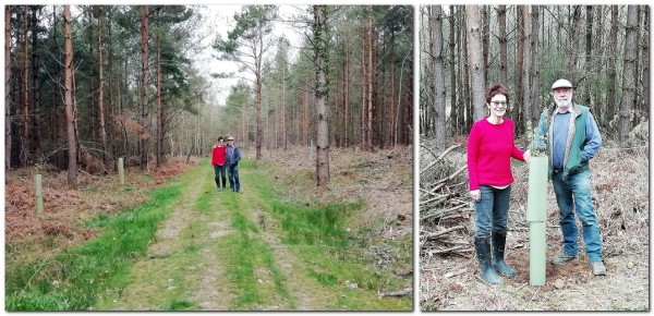 Friends of Lewes plant elms at Vert Woods