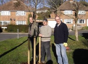 Tree planting, Valence Road, Lewes