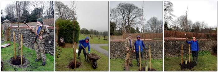 Friends of Lewes Planting resistant Elm