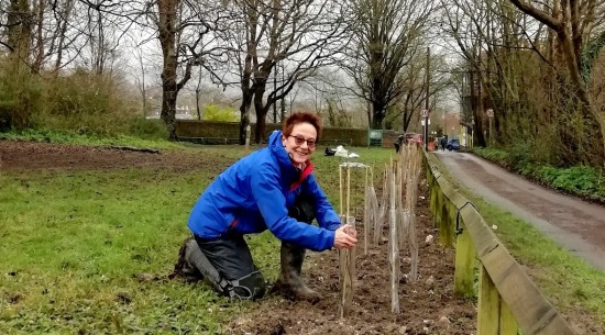 Hedge planting at Jubilee Gardens, Lewes