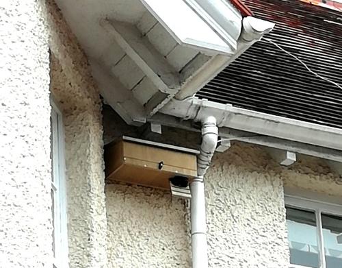 Swift's nest box installed